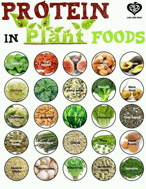 Sumber Protein Nabati Kesehatan Vegan Minimarket Vegan Dr
